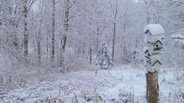 December 14, 2013 Snow 006