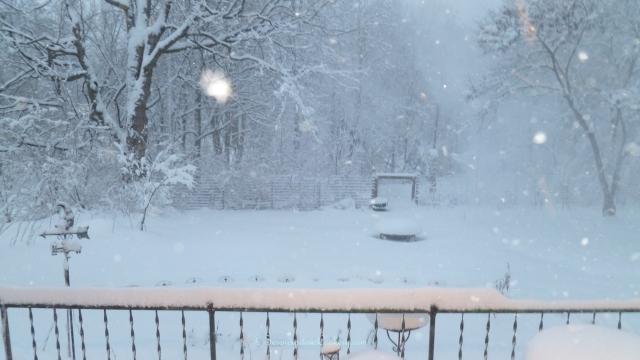 January 5, 2014 Evening Snow 004